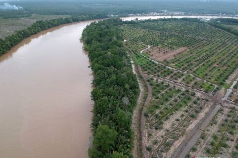 Mangrove-forests-to-hereafter-not-be-converted-into-ponds-Minister